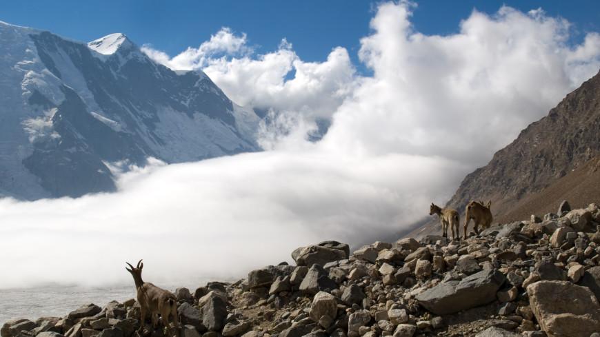 Двух попавших под камнепад альпинистов эвакуировали вертолетом