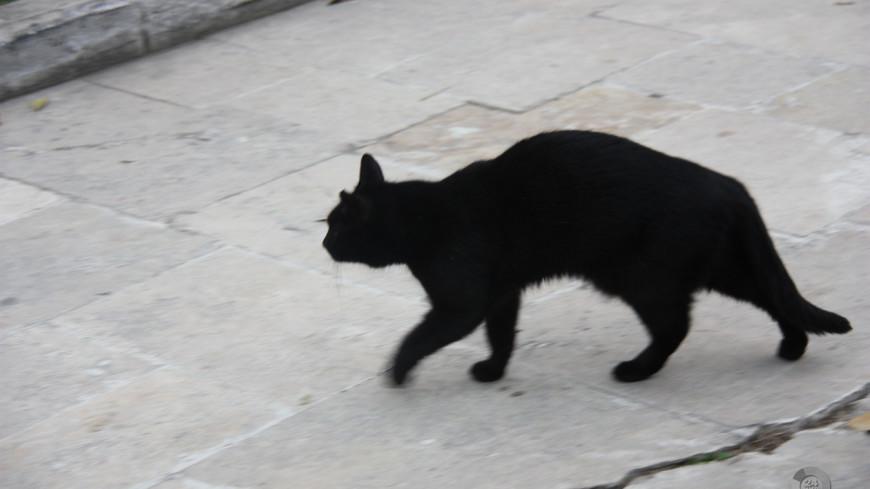 Ученые объяснили, почему человек никогда не догонит домашнюю кошку
