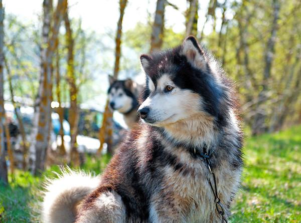 Опрос показал, что люди выбирают собак вместо отношений