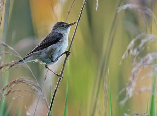 У птиц нашли способность «видеть» магнитную карту
