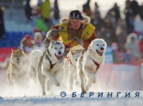 Гонки на собаках, полеты над вулканами и рок-марафон: чем удивит фестиваль «Берингия – 2021» на Камчатке?
