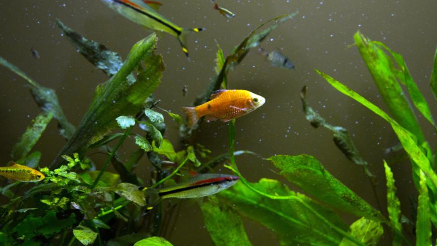 Генетики случайно превратили плавники аквариумной рыбки в конечности