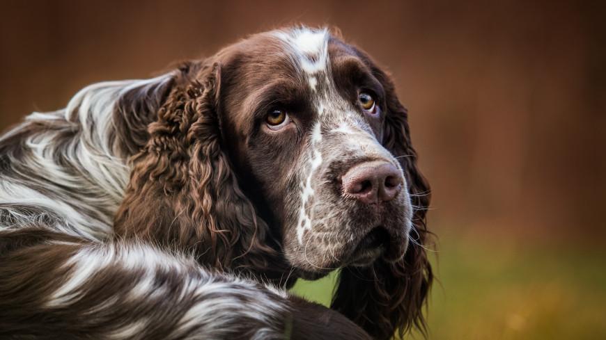 В Британии домашнего пса впервые наградили орденом «За заслуги»