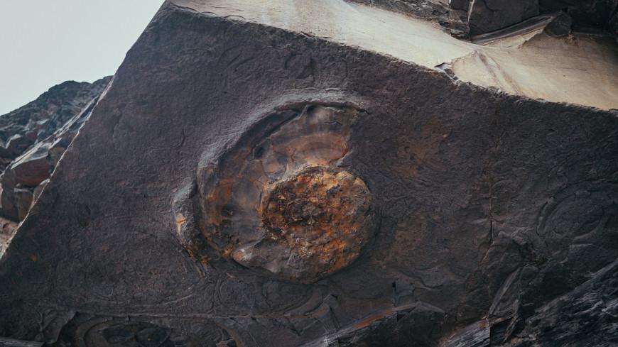 В Венгрии нашли окаменелость древнего кальмара-вампира