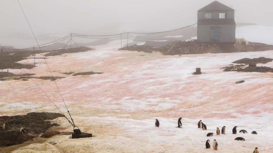 В Антарктиде снег окрасился в зеленый и розовый цвета