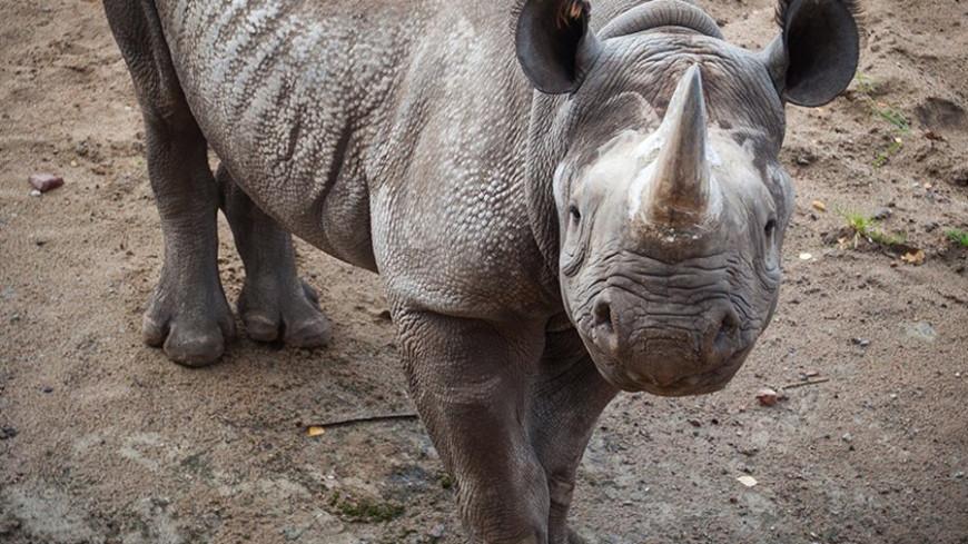 "Фото: Елизавета Шагалова, ""«МИР 24»"":http://mir24.tv/, зоопарк, носорог"