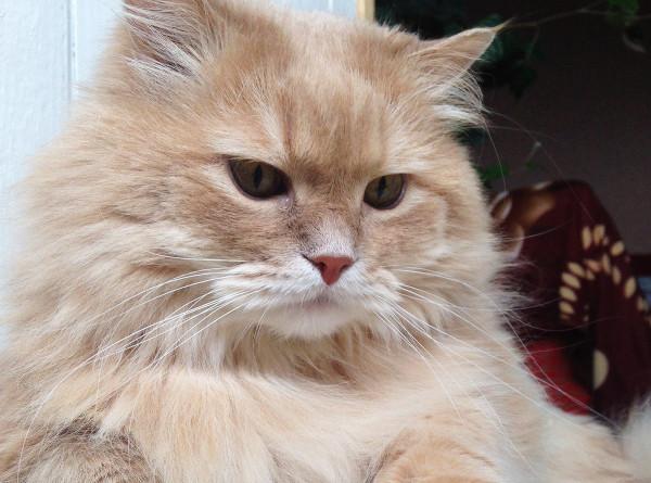 Кот преодолел 40 км, чтобы вернуться в родную деревню