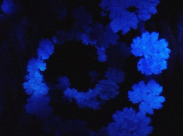 Исследование выявило причину появления синего цвета в природе