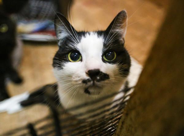 Московский школьник организовал масштабную операцию, чтобы спасти кошку