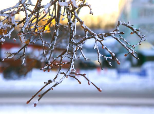 День ведунов, или перелом зимы: народные приметы на 28 января