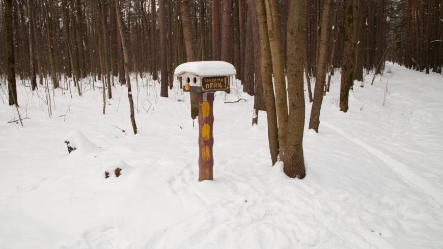 Кормушка для птиц в зимнем лесу