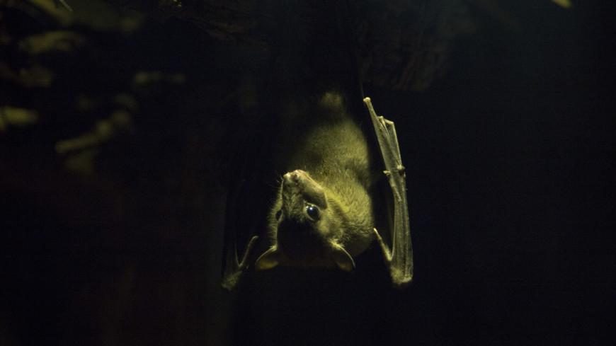Летучая мышь в Крокус Сити Океанариум