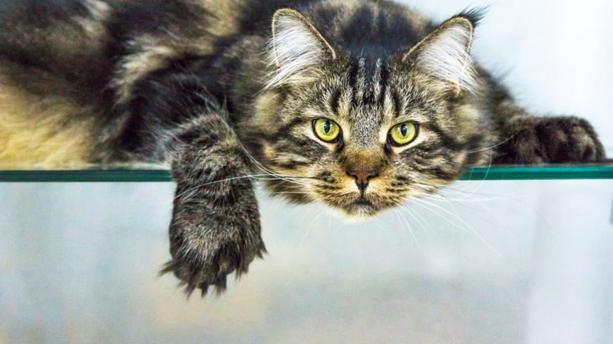 Психологи оценили влияние кошек на работу «удаленщиков»
