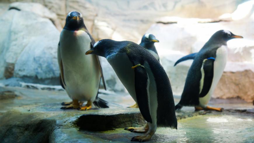 зоопарк, московский зоопарк, животные, пингвин, птица,