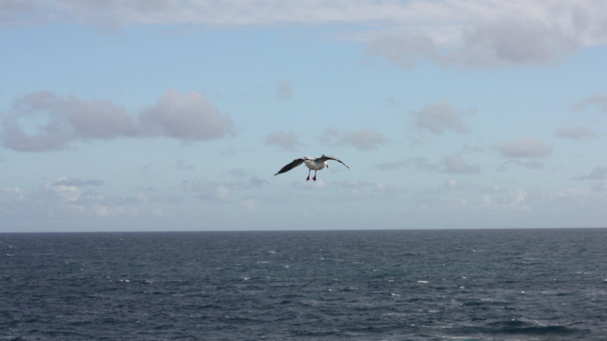 Поиски моряков с затонувшего траулера «Онега» в Баренцевом море прекращены