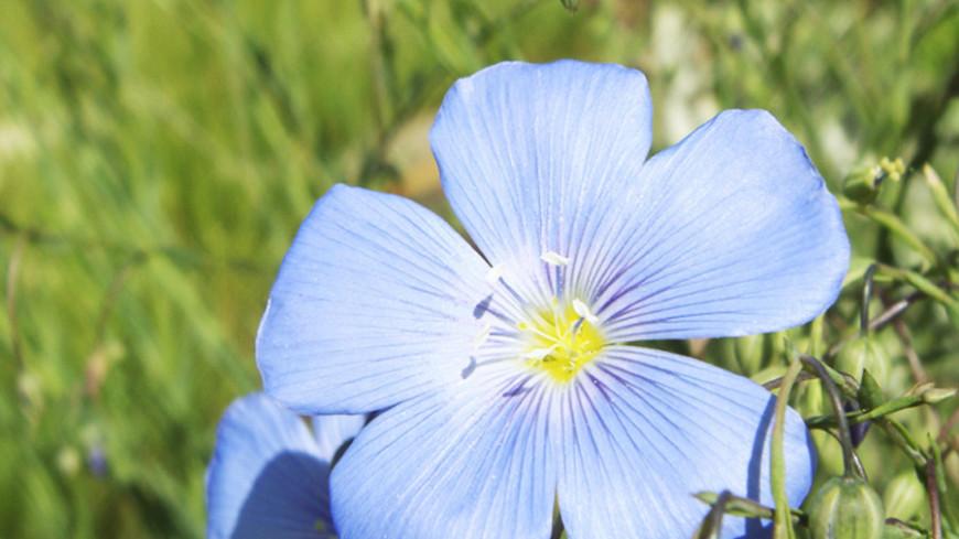 © Фото: Чегляева, «Мир 24», цветок, цветы