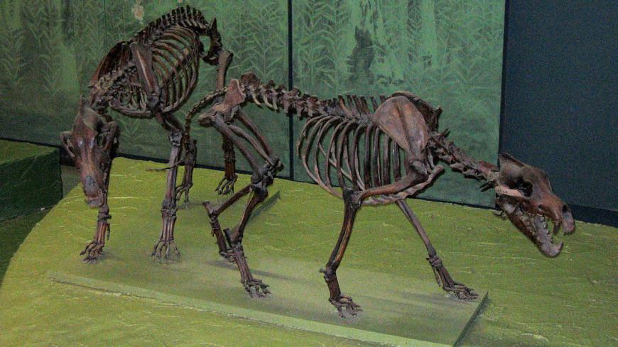 Вымершим «ужасным волкам» провели ДНК-анализ
