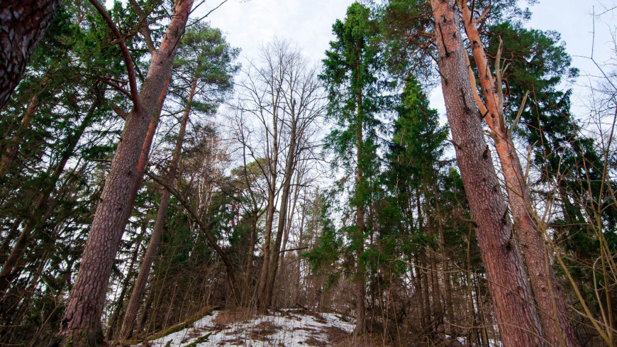 "Фото: Николай Костюшин (МТРК «Мир») ""«Мир 24»"":http://mir24.tv/, деревья, весна, лес, снег, таяние снега, природа"