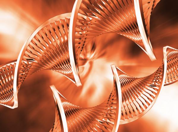 Геном современного человека оказался уникален лишь на 7%