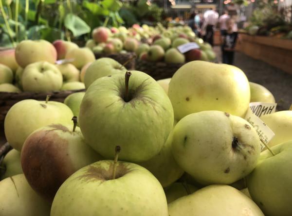 Российским производителям яблок не хватает хранилищ. ЭКСКЛЮЗИВ