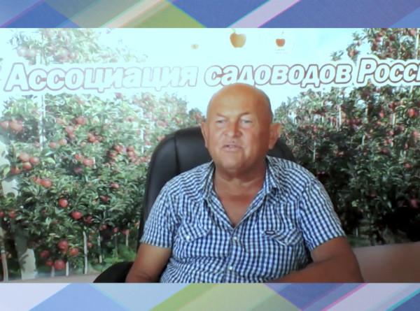 Борьба за яблоки: садоводы жалуются на невозможность реализовать урожай из-за импорта