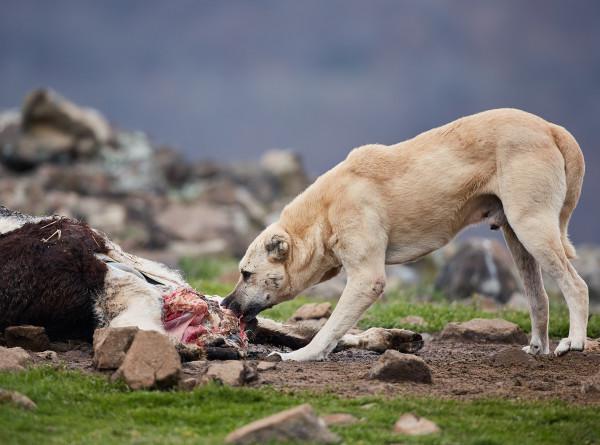 Евразийская охотничья: когда собака стала другом человека