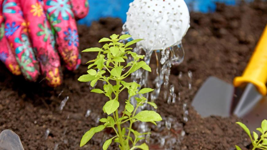 """Фото: Дмитрий Белицкий (МТРК «Мир») """"«Мир 24»"""":http://mir24.tv/, лейка, сад, огород, саженцы, рассада, дача, посадки, грядки"""