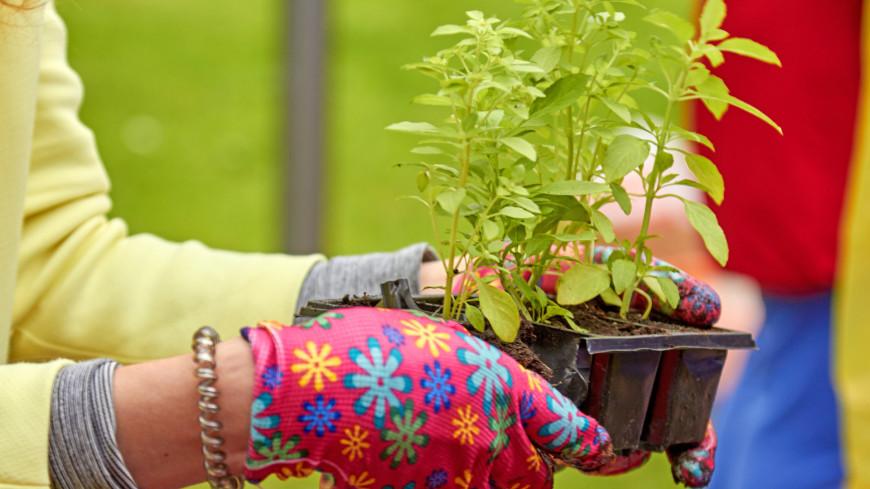 "Фото: Дмитрий Белицкий (МТРК «Мир») ""«Мир 24»"":http://mir24.tv/, грядки, сад, огород, саженцы, рассада, дача, посадки"