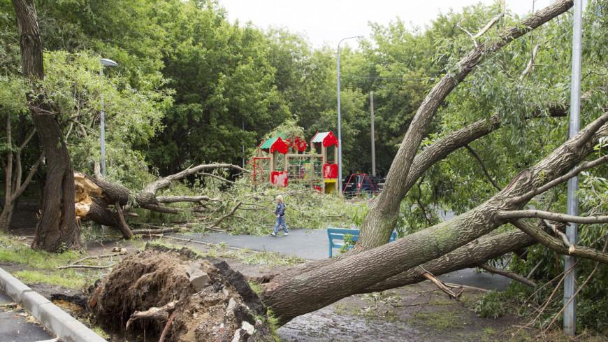 """Фото: Максим Кулачков (МТРК «Мир») """"«Мир 24»"""":http://mir24.tv/, детская площадка, упало дерево, дерево, ураган, шторм, ветер, машина, ливень, дождь, гроза"""