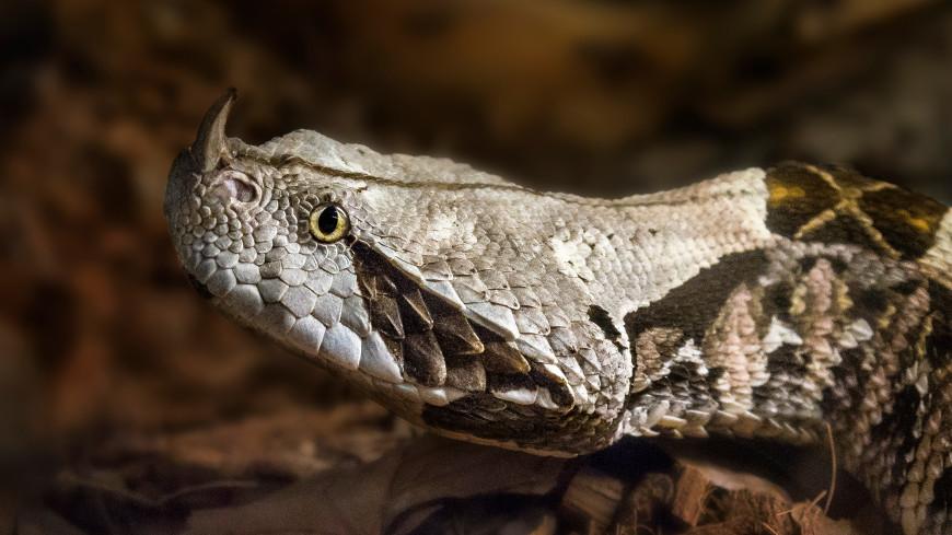 В каналах Флориды обнаружили «змей-пенисов»