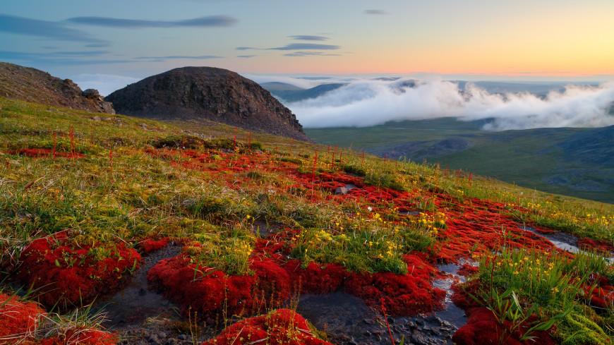 Действие программы «Дальневосточный гектар» распространили на Арктику