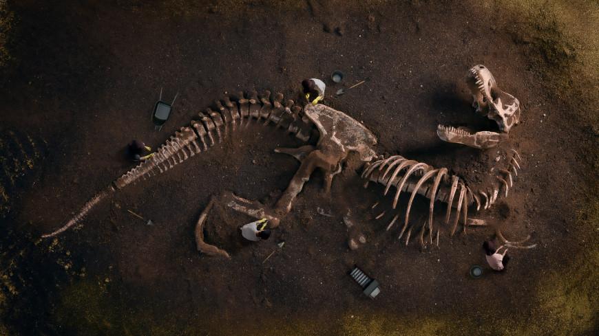 В Каталонии нашли останки когтистого динозавра размером с автобус