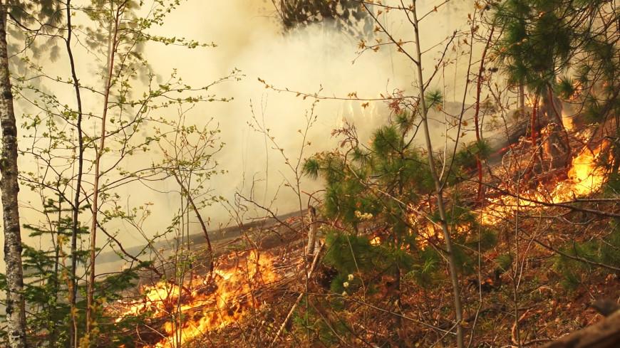 Путин: К тушению лесных пожаров в регионах России привлекут военных
