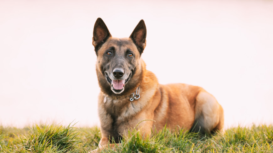 Четвероногая звезда TikTok: собака из Краснодара спасает людей и собирает лайки