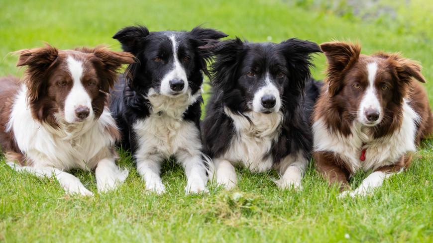 Ученые определили самую умную породу собак