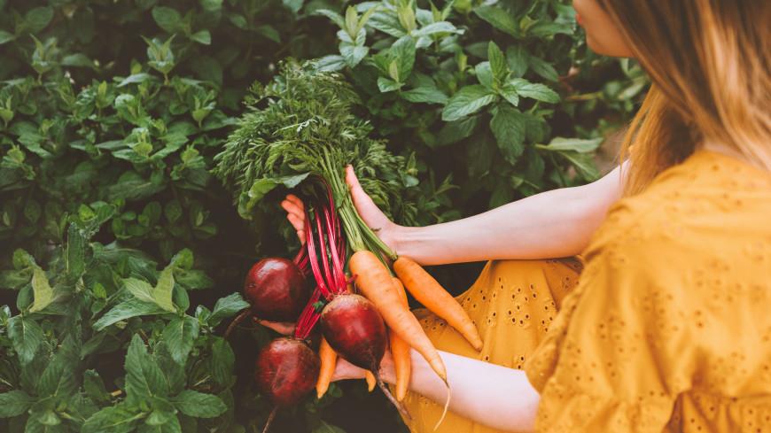 Успеть до осени: какими удобрениями нужно подкормить морковь и свеклу