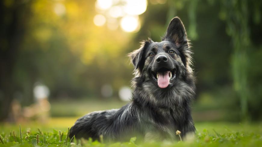 Ученые выяснили, чем питались собаки поселения каменного века в Смоленской области