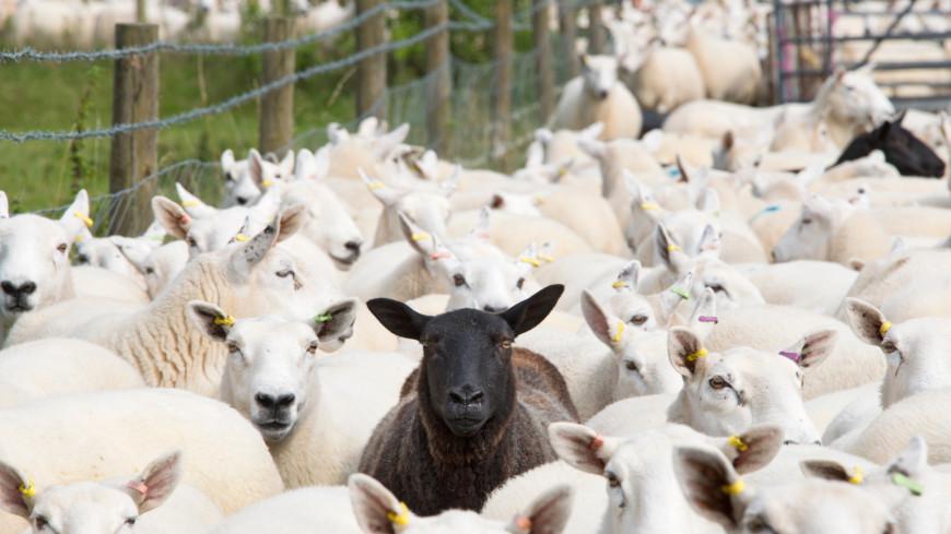 Спасти поголовье: фермерам Казахстана привезли корм для голодающего скота