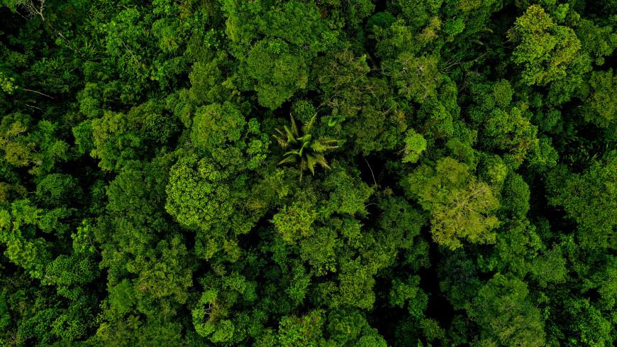 На защите природы: в Бразилии восстанавливают мангровые леса