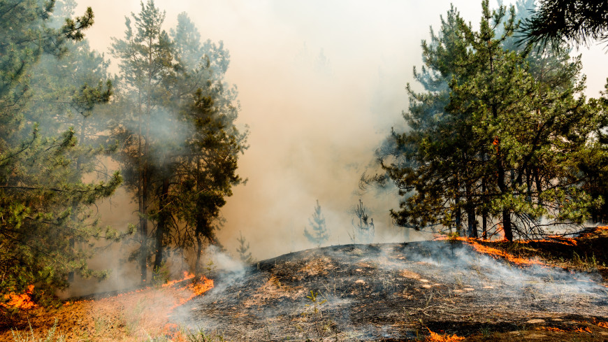 Горячая пора: из-за жары в 54 регионах России объявлен особый противопожарный режим