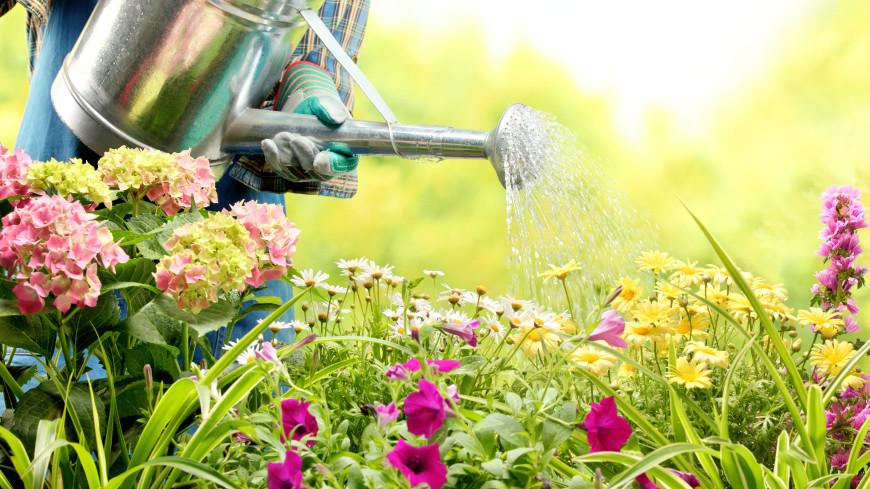 «Капельный полив без системы»: как подготовить огород перед отпуском?