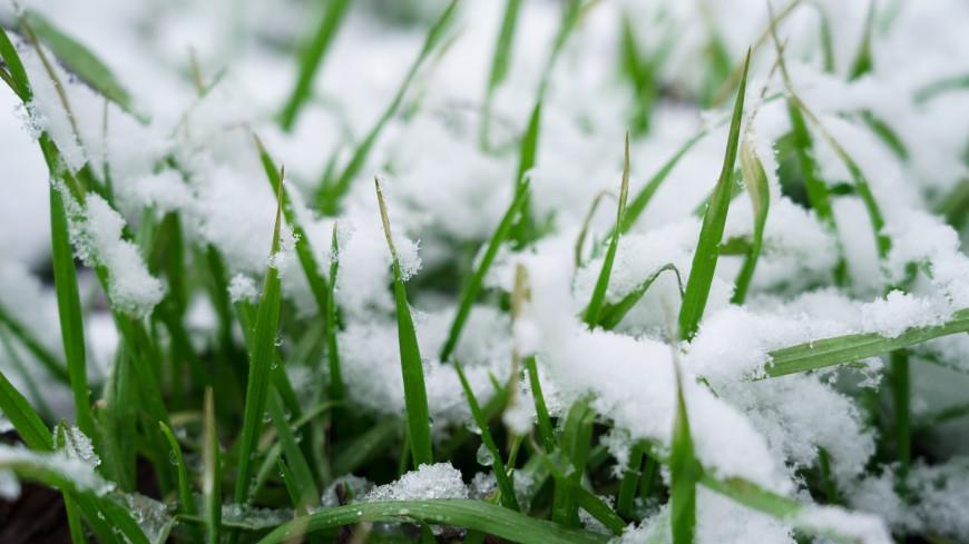 Фермеры на Колыме укрыли от снега и спасли урожай