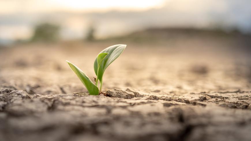 На части территории Свердловской области введен режим ЧС из-за засухи