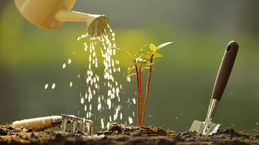 Каждый день и теплой водой: как правильно поливать огород в жару?