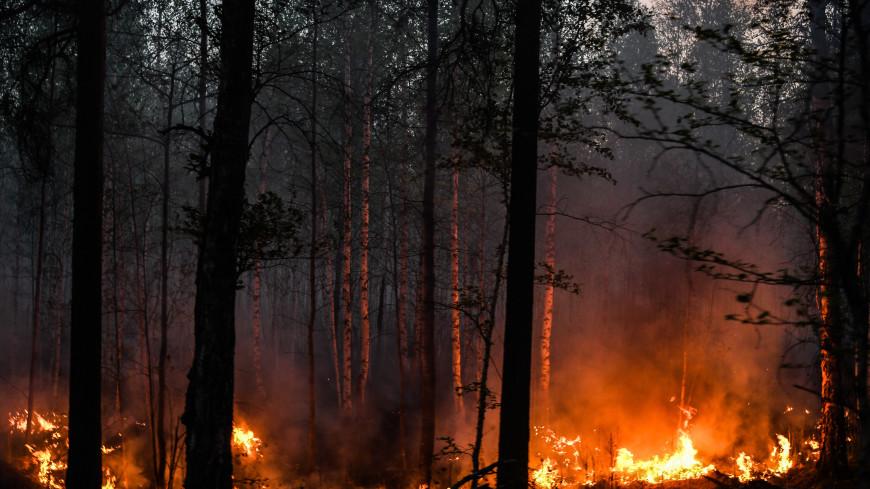 В России тушат лесные пожары на площади более 440 тысяч гектаров