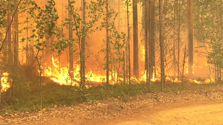 Карелия и Якутия в огне: почти 800 тысяч гектаров леса горит в России