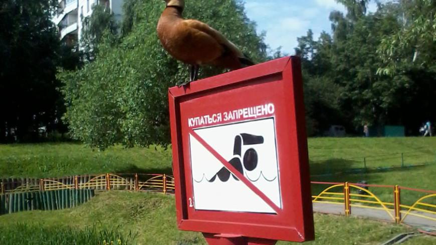 "Фото: Елена Андреева ""«Мир24»"":http://mir24.tv/, купаться запрещено"