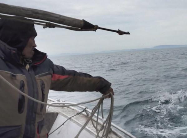 Китовая охота гарпуном глазами чаек: «МИР» покажет уникальные кадры в фильме «Stories о настоящих человеках»