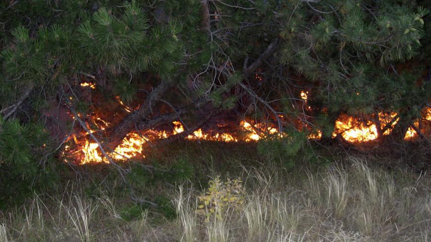 Площадь лесных пожаров в России увеличилась втрое