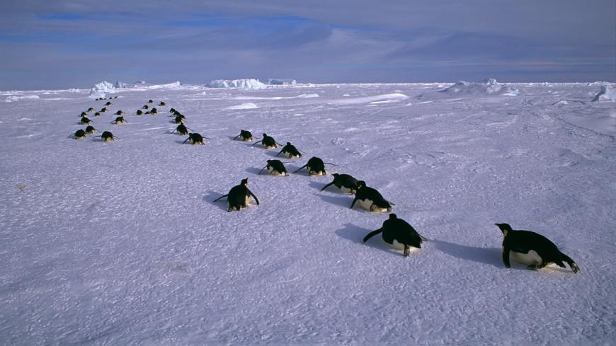 Ученые нашли разгадку внезапного исчезновения озера в Антарктиде